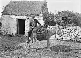 donkey creel